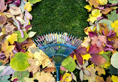 4 Tips to Clean Your Yard in Fall