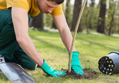 5 Lawn Care Goals in Port Orange for 2021